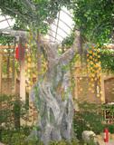 室内假榕树