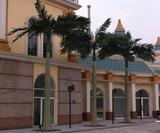 淮南动漫园仿真椰子树